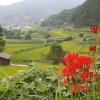 20080915asuka6