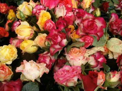 wild-rose-223850_1280