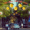 flower-street-254954_1280