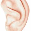 ear-42411_1280