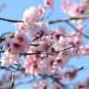 flower-90852_1280